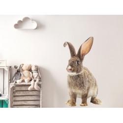 Naklejka na ścianę - królik czesiu